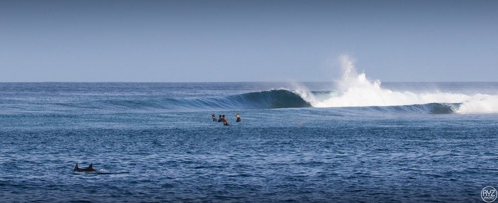 see dolphins while surfing