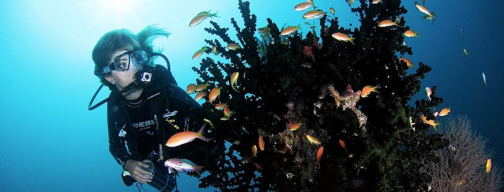 Snorkelling & Diving Soneva